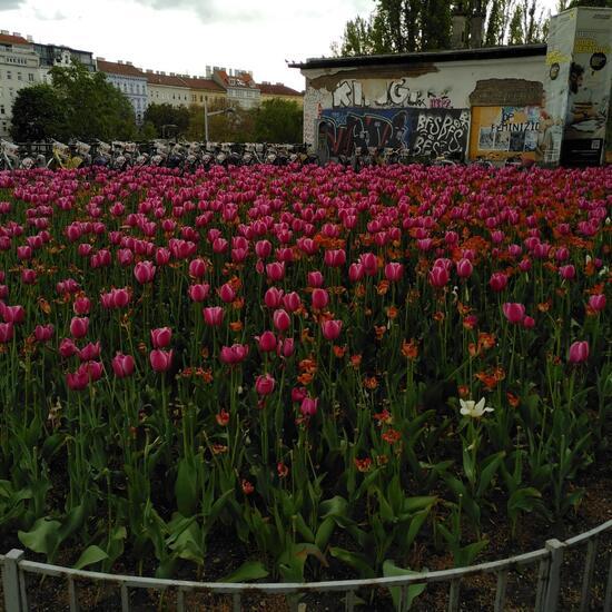Landschaft: Stadt und Garten im Habitat Hecke/Blumenbeet in der NatureSpots App