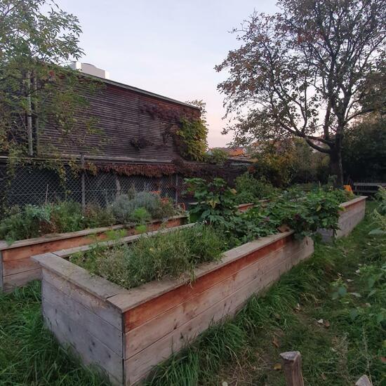 Landscape: Urban and Garden in habitat Garden in the NatureSpots App